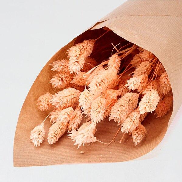 fleurs-sechees-mariage-phalaris-corail-TA182-208-02-1