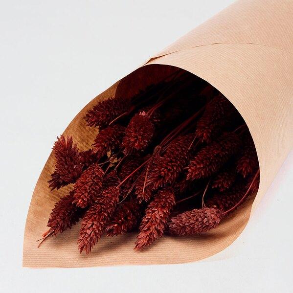 droogbloemen-phalaris-donkerbruin-TA782-209-03-1