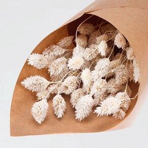fleurs-sechees-bapteme-phalaris-blanc-TA782-210-02-1